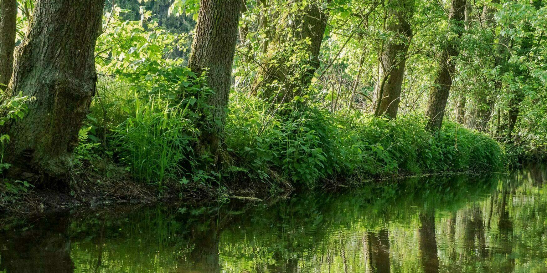Waldbaden im Naturpark Frankenwald